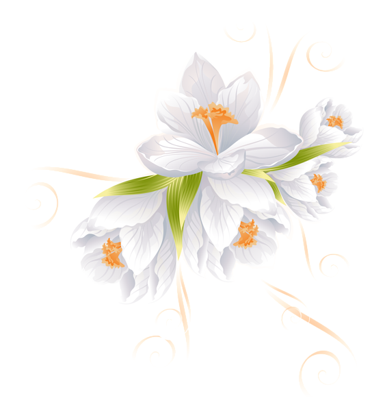 White flower decor transparent. Margarita clipart watercolor