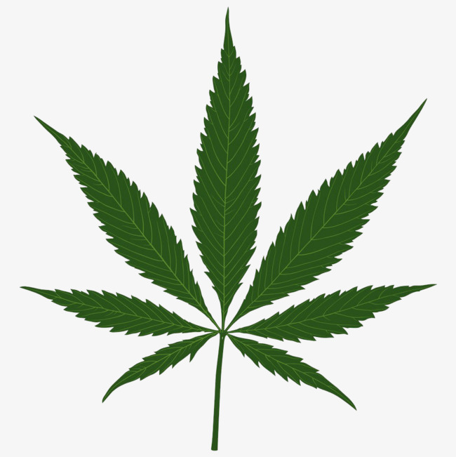 Cannabis leaves illustrations plant. Marijuana clipart