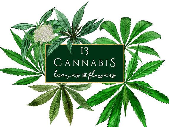 Cannabis watercolor marihuana clip. Marijuana clipart