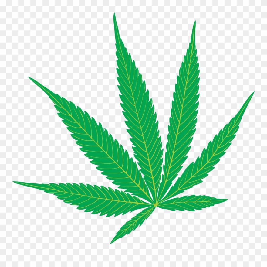 Cannabis sativa hemp clip. Marijuana clipart