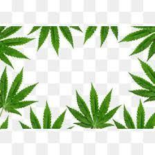 Marijuana clipart border. Pin on pngs