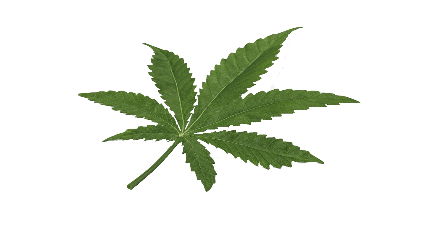 Marijuana clipart copyrighted. Leaf cannabis hd png