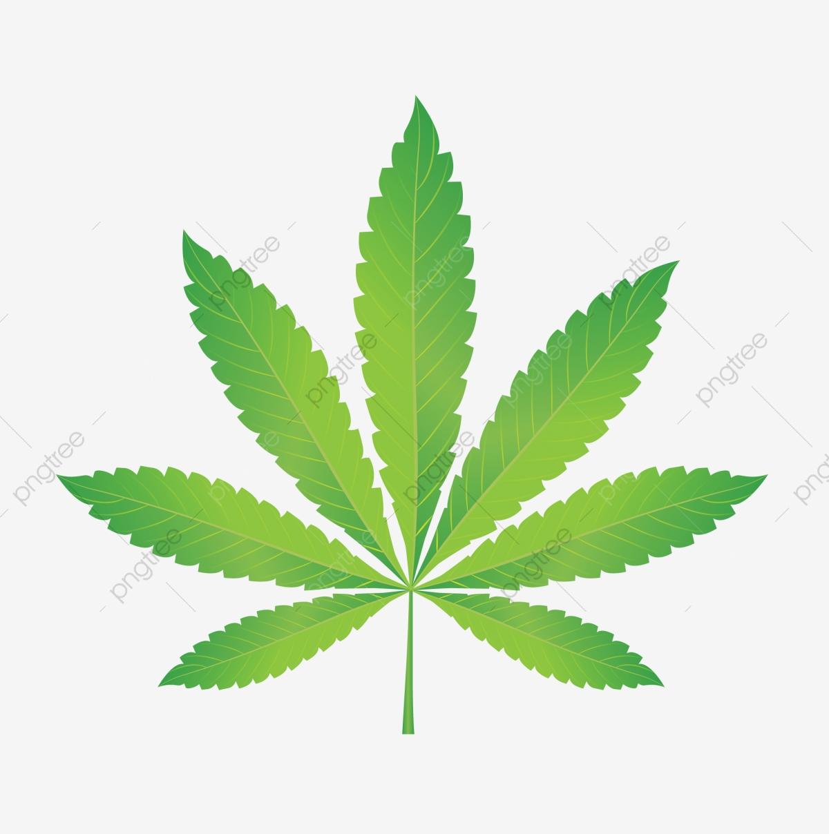 Green nature cannabis png. Marijuana clipart copyrighted