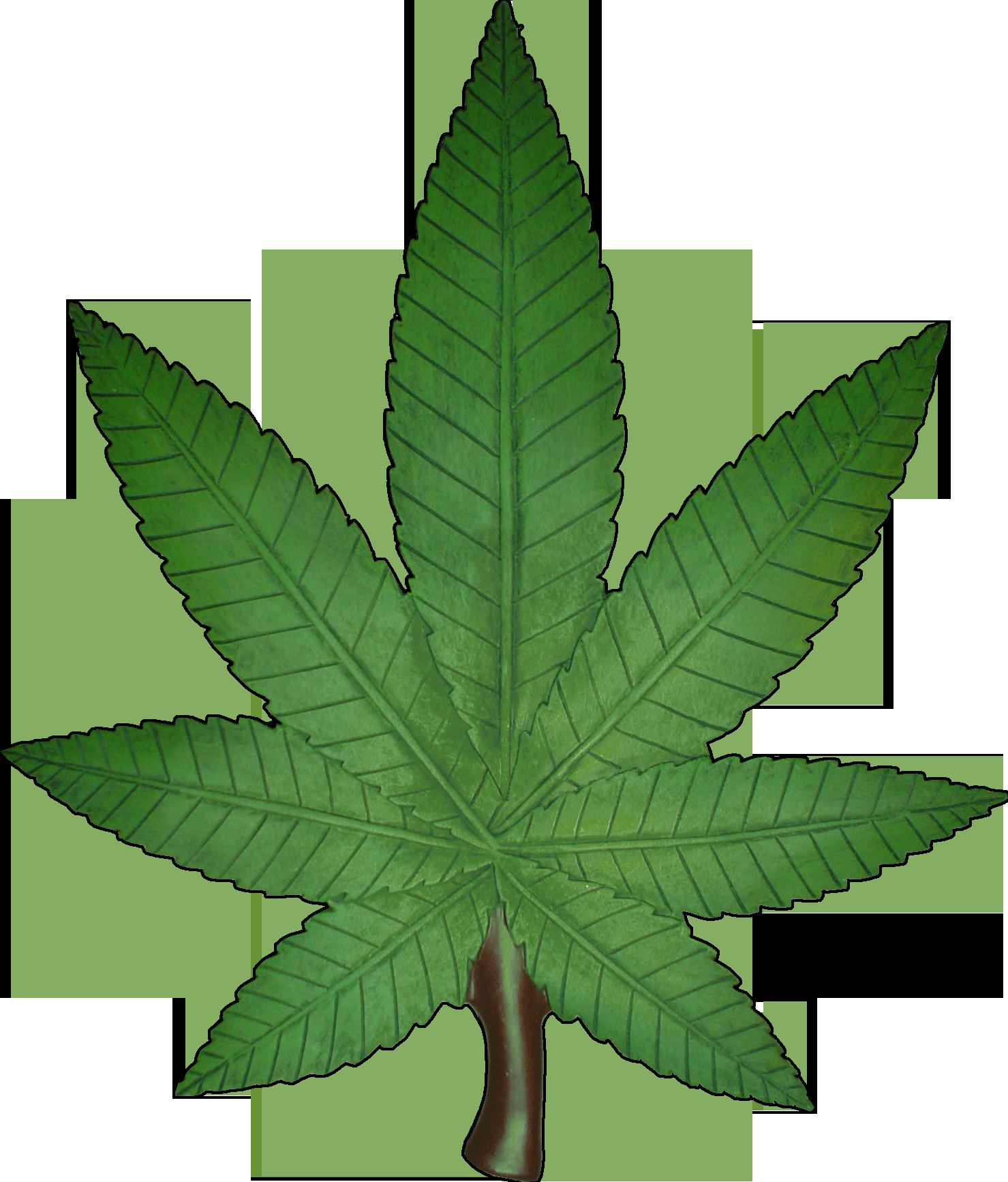 Weeds transparent frames illustrations. Marijuana clipart eco car