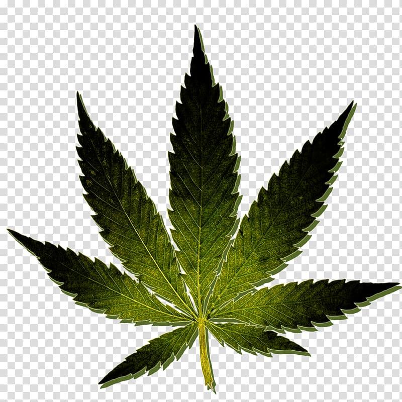 Marijuana clipart hash. Medical cannabis kush oil