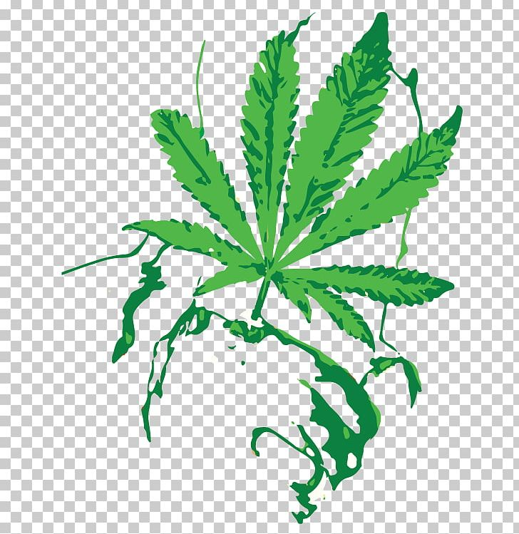Cannabis shop oil sativa. Marijuana clipart hash