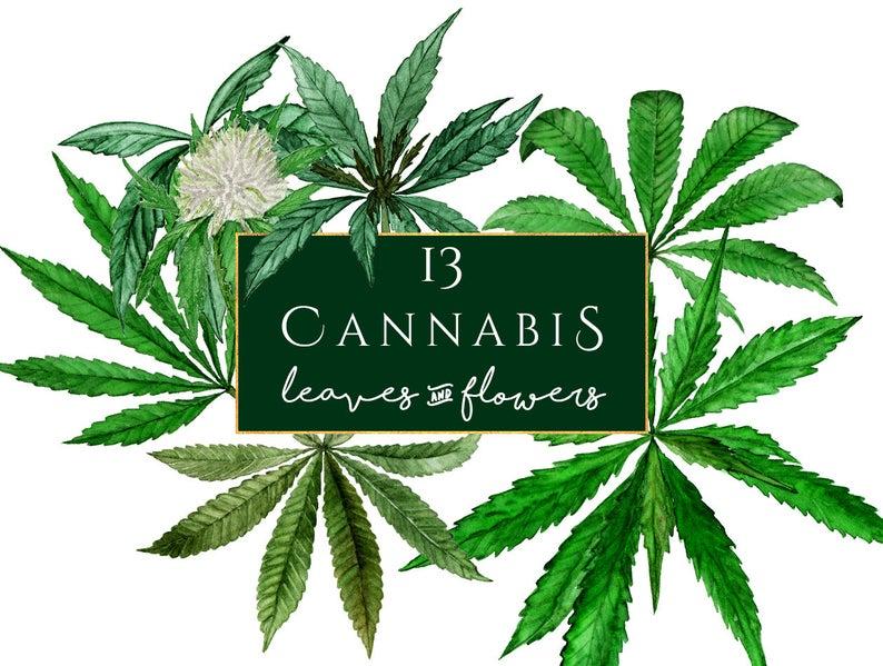 Cannabis watercolor marihuana clip. Marijuana clipart hemp