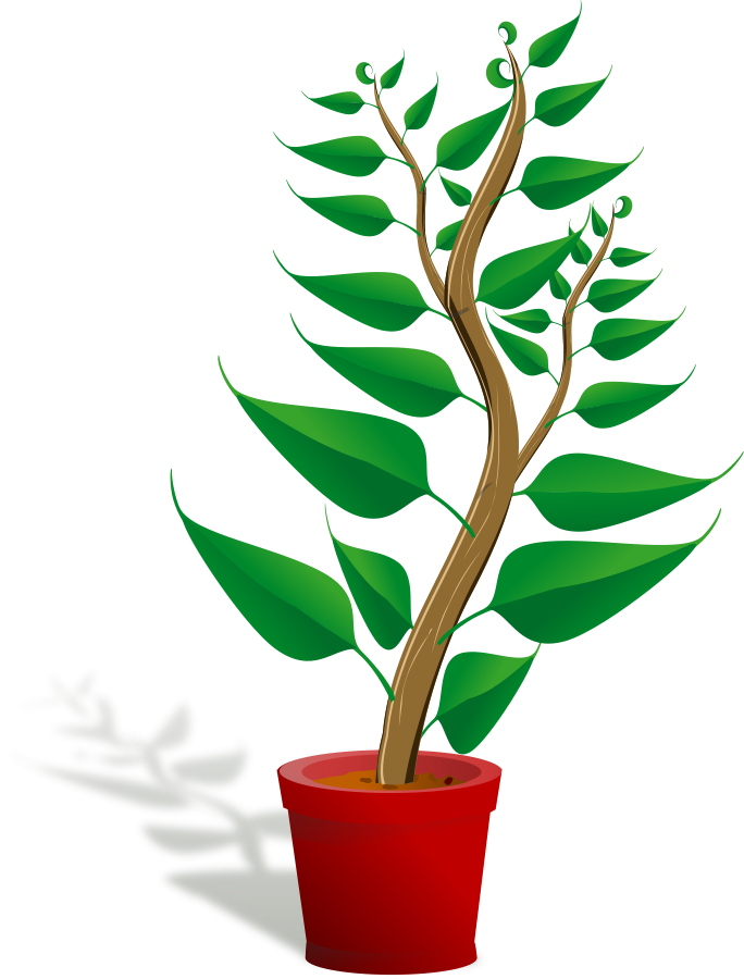 Free plant pictures download. Poinsettia clipart animated