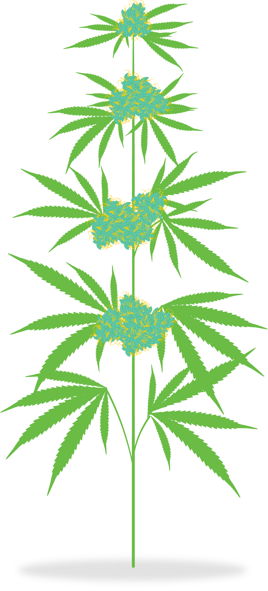 How is medicine meadow. Marijuana clipart transparent
