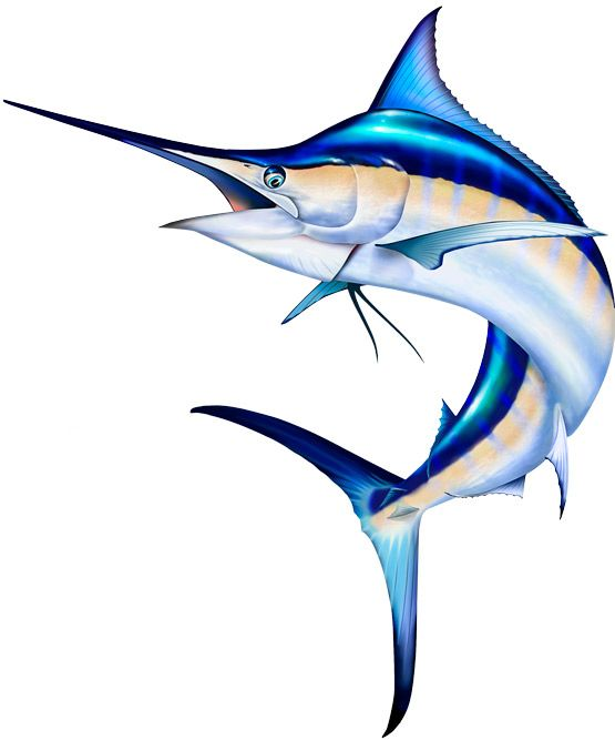 Blue photoshop and fish. Marlin clipart