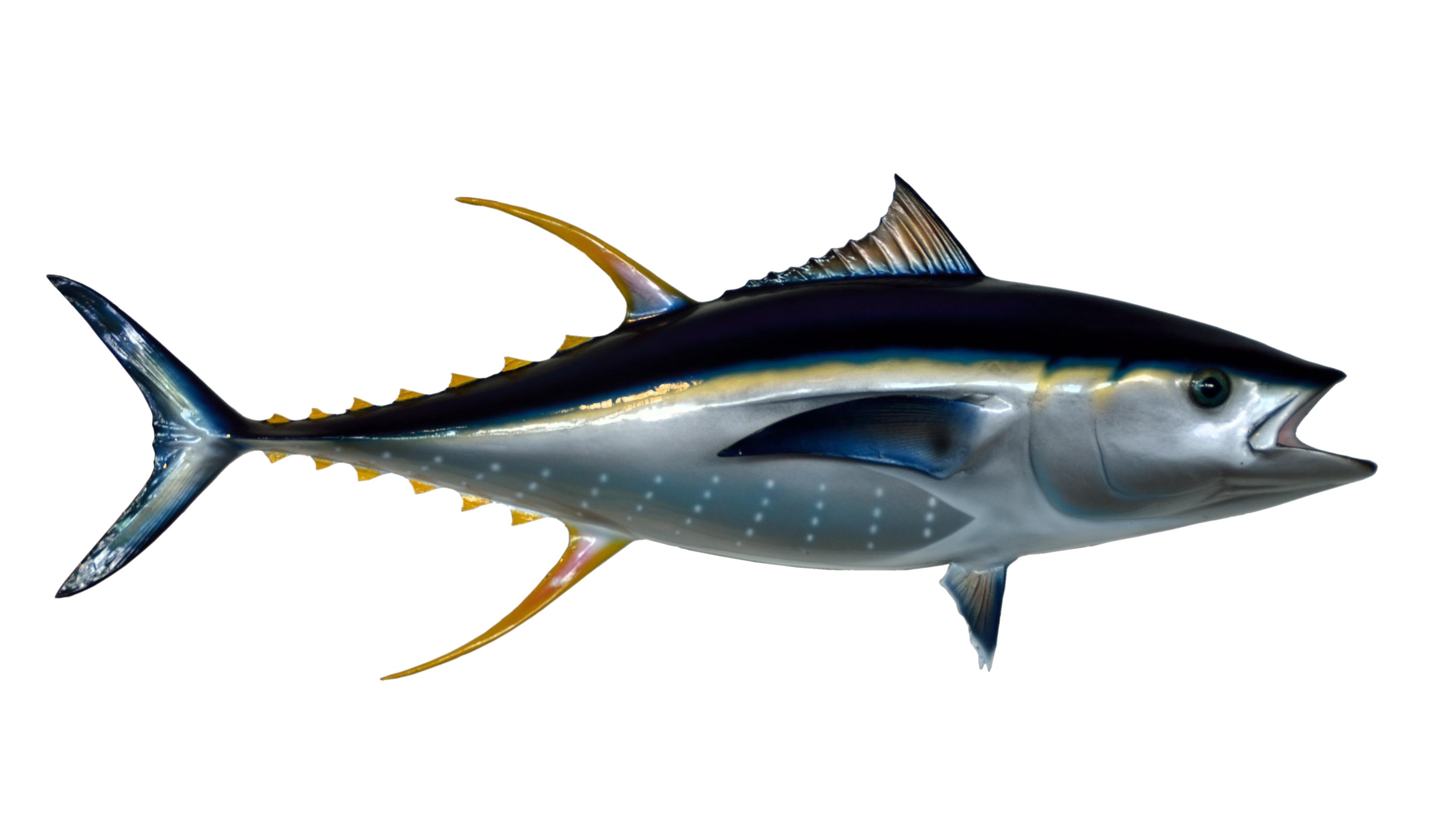 Png image purepng free. Tuna clipart tuna fish