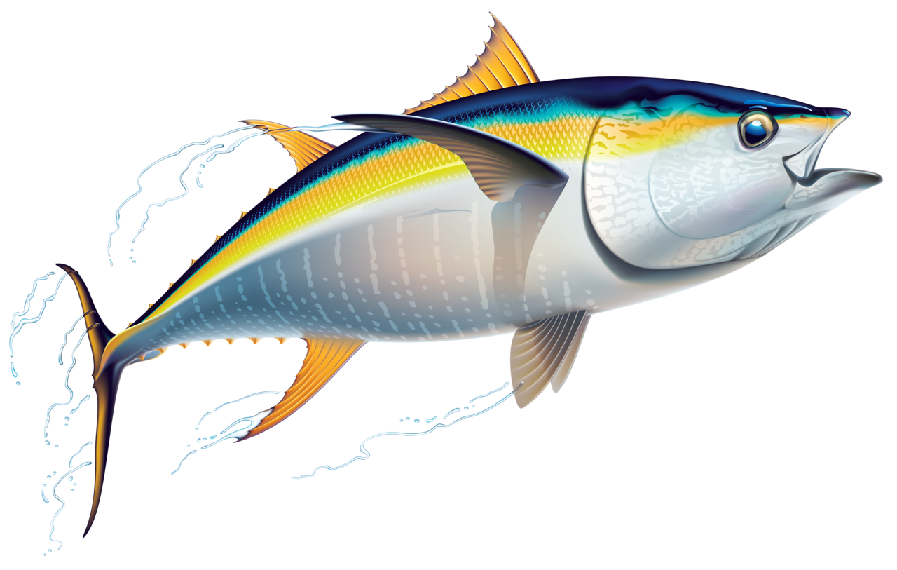 png pinterest fish. Marlin clipart offshore fishing