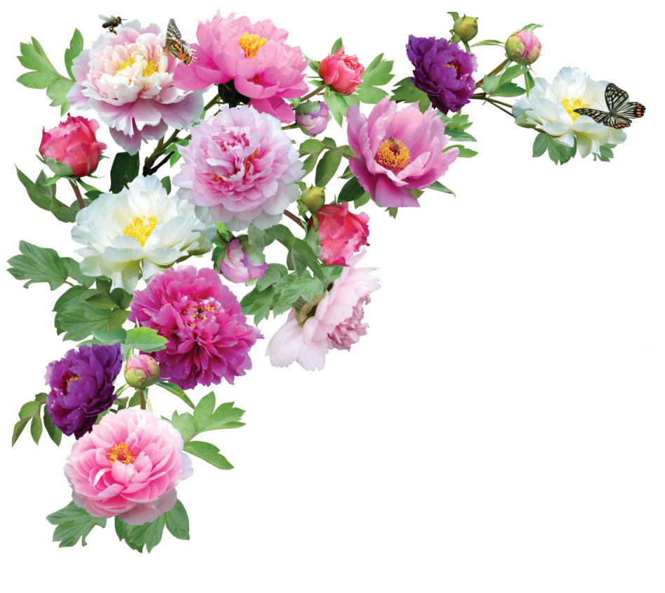 Wedding images free download. Png flower