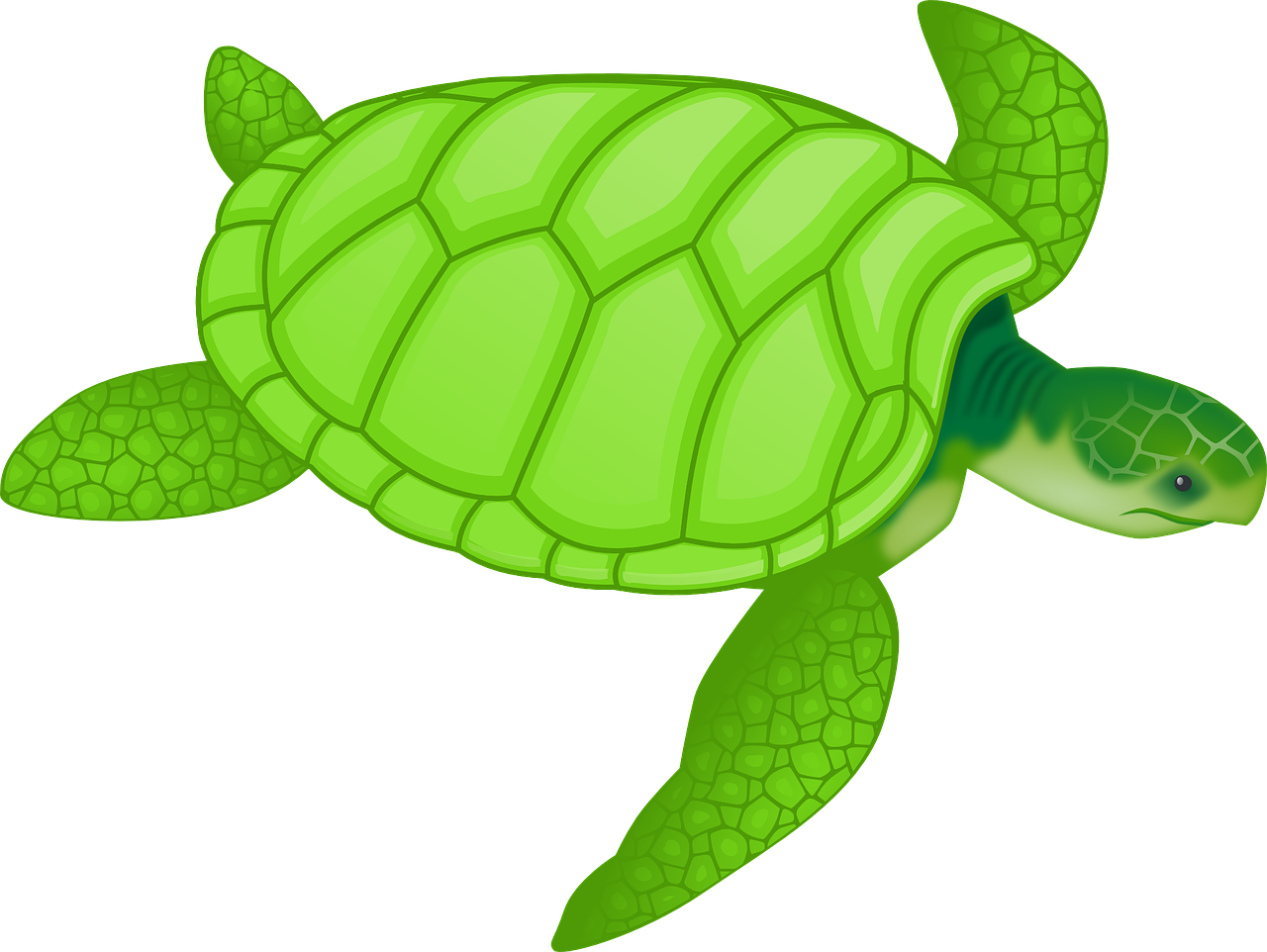 Tortoise green reptiles turtles. Playdough clipart transparent