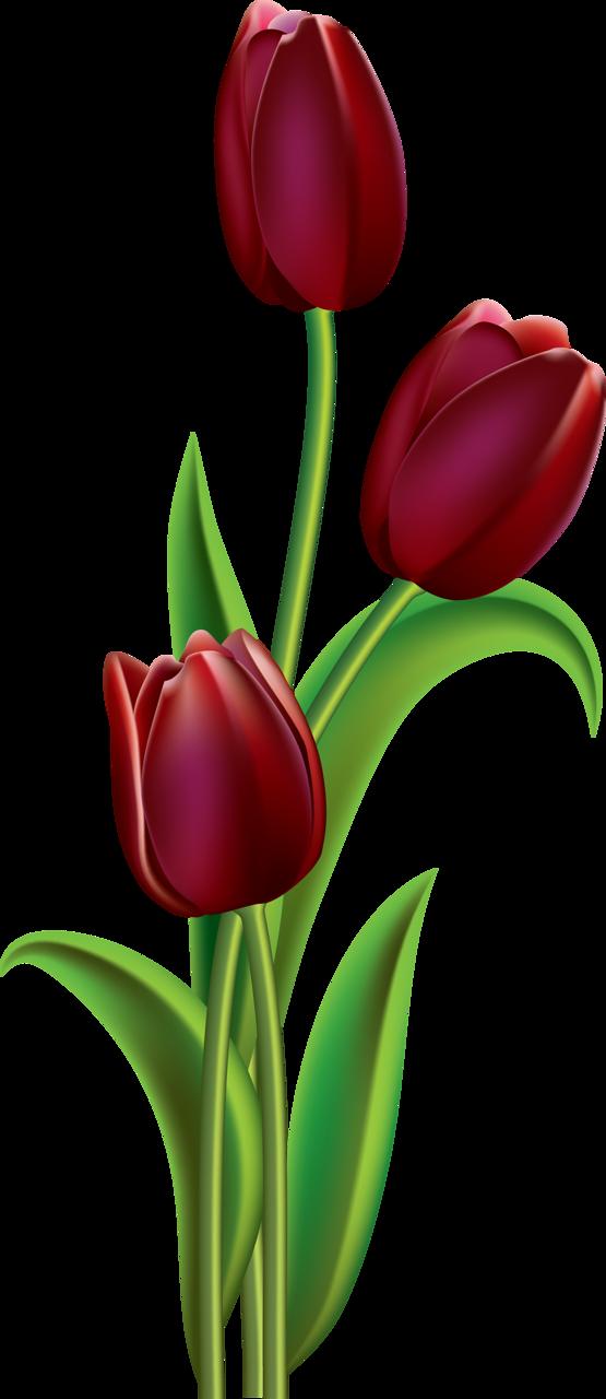 png pinterest flowers. Poppy clipart orange tulip