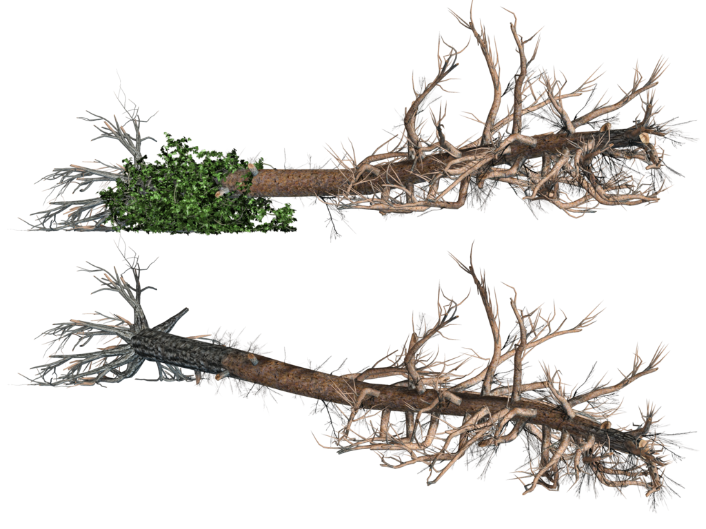 Fallen trees png stock. Roots clipart tree icon