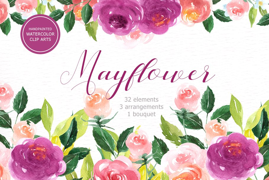 Mayflower clipart flower. Floral watercolor illustrations