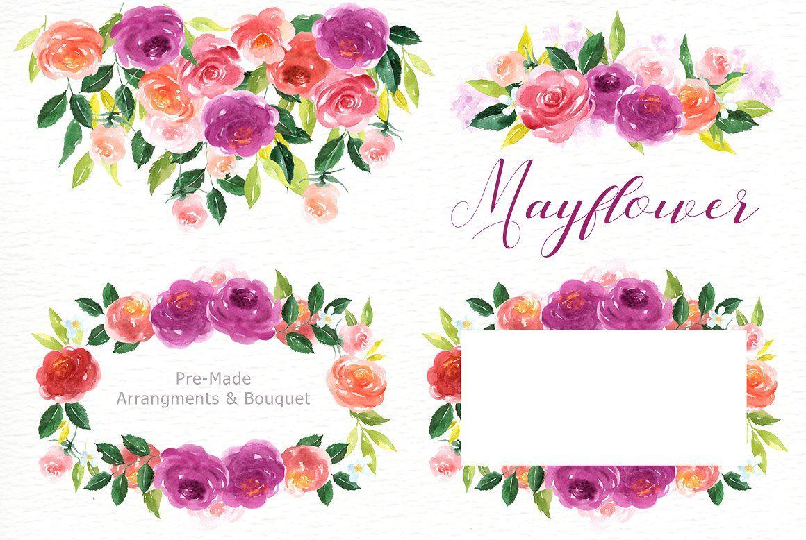 Floral watercolor arrangements . Mayflower clipart flower