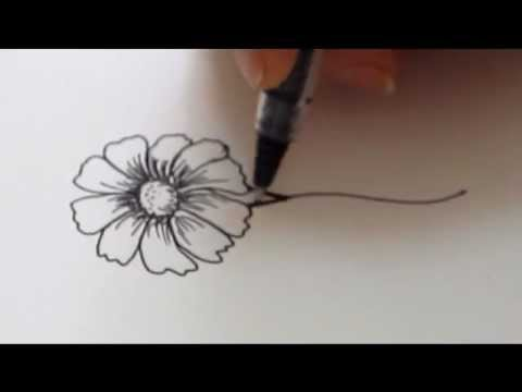 Mayflower clipart phool. How to draw a