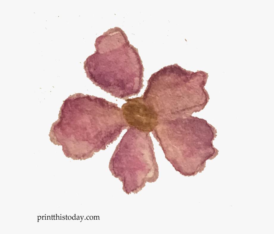 Mayflower clipart pretty flower. Free watercolor handmade leaves