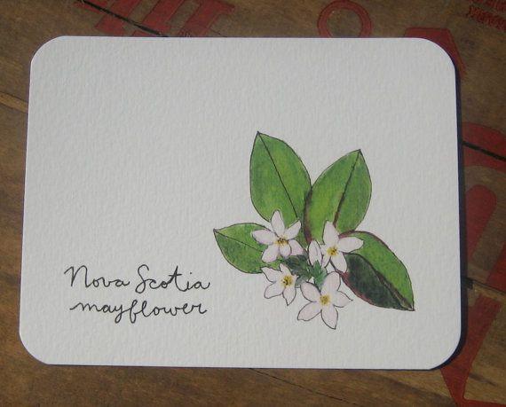 Nova scotia flowers of. Mayflower clipart wildflower