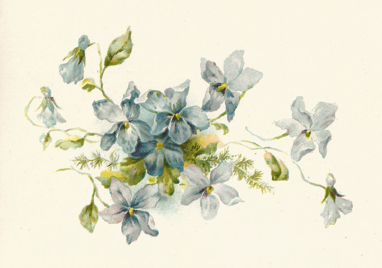 Mayflower clipart wildflower. Free vintage flower cliparts