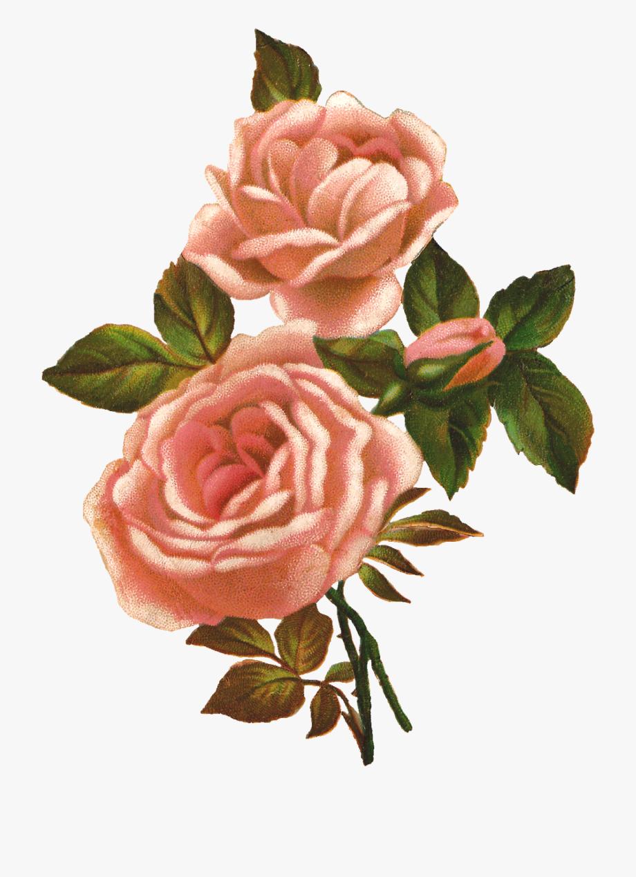 Cliparts free download best. Mayflower clipart wildflower