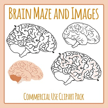 And images clip art. Maze clipart brain