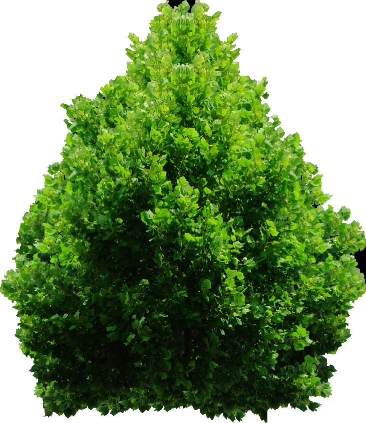 Tree png by dbszabo. Maze clipart bush
