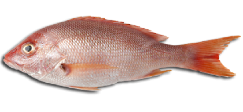 Fish And Meat PNG Transparent Fish And Meat