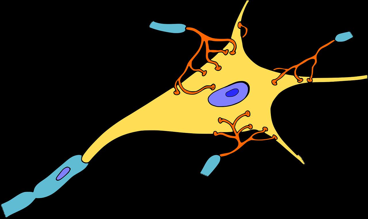 Nervous clipart nervous man. Histology of tissue