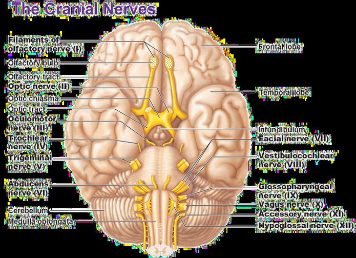 Yoga archives savy international. Meditation clipart gyani