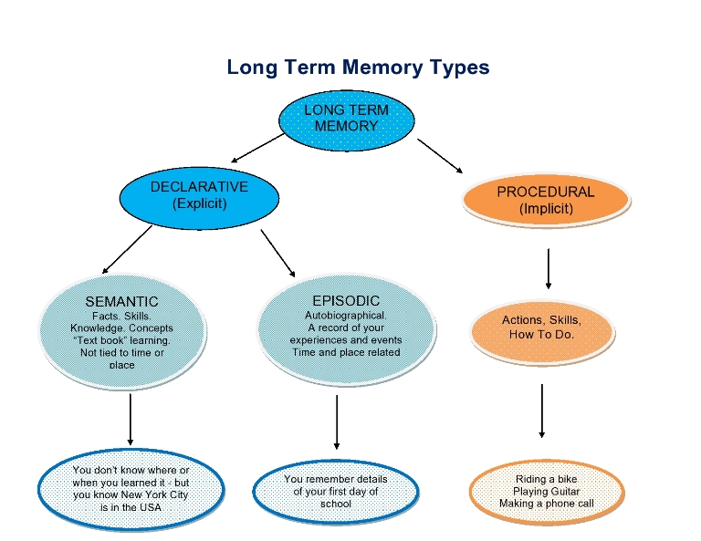 Memories clipart learning and memory. Free long term cliparts