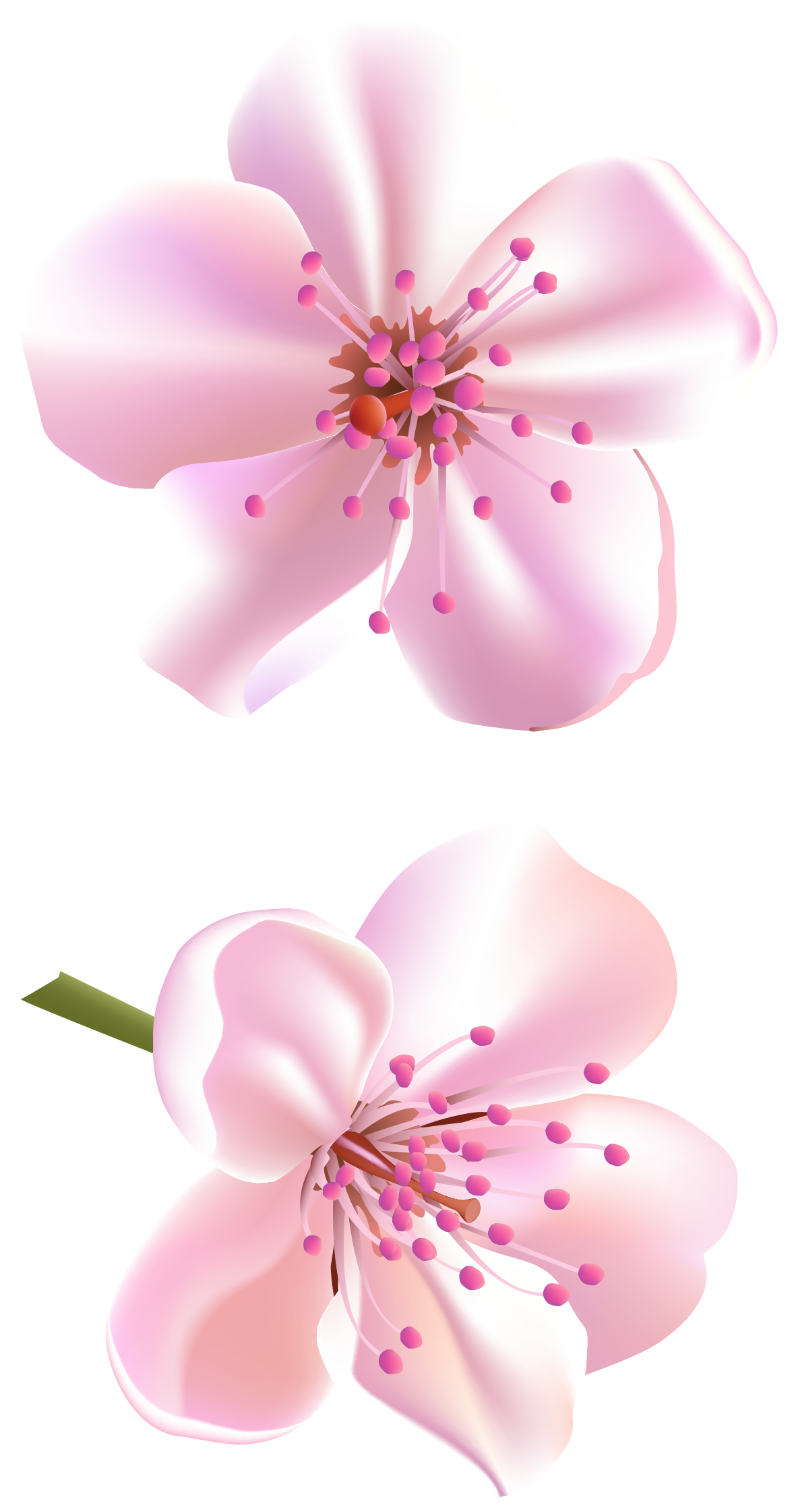 Memories clipart purple tree. Spring pink flowers png