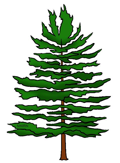 pinecone clipart coniferous tree