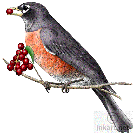 Nest clipart robins nest. American robin drawing at