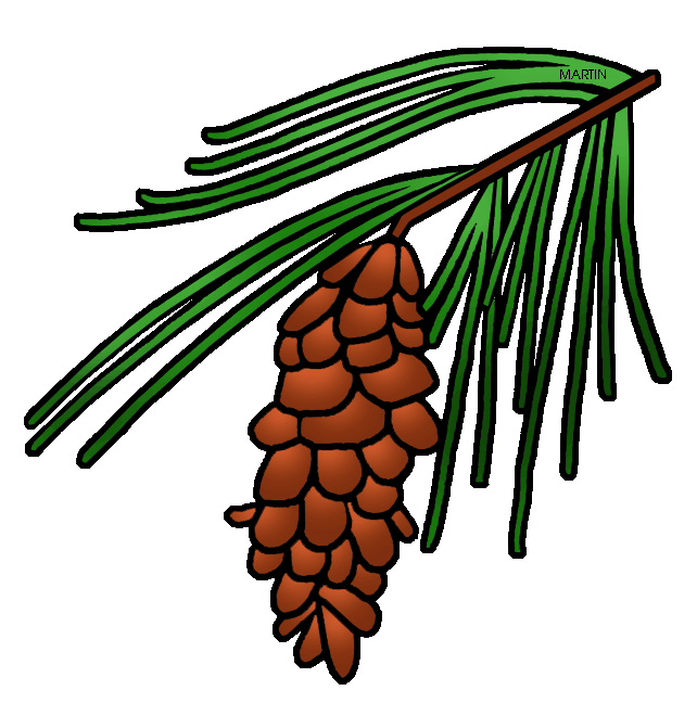 United states by phillip. Pinecone clipart clip art
