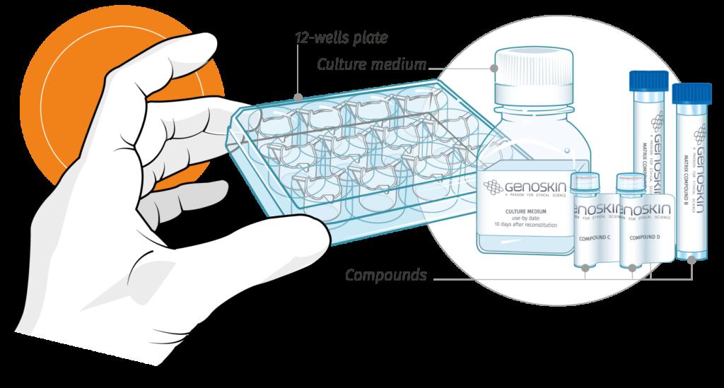 Skintools human culture kit. Skin clipart skin tissue