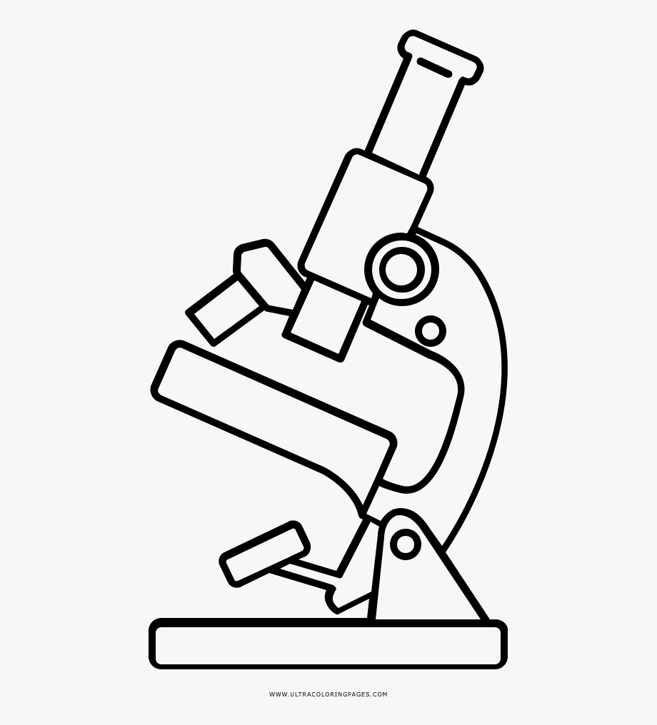 Microscope clipart draw. Ovary drawing cliparts