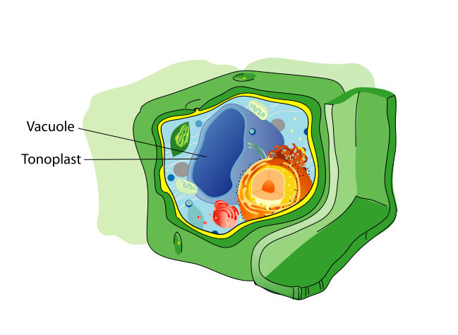 How do you identify. Microscope clipart plant science