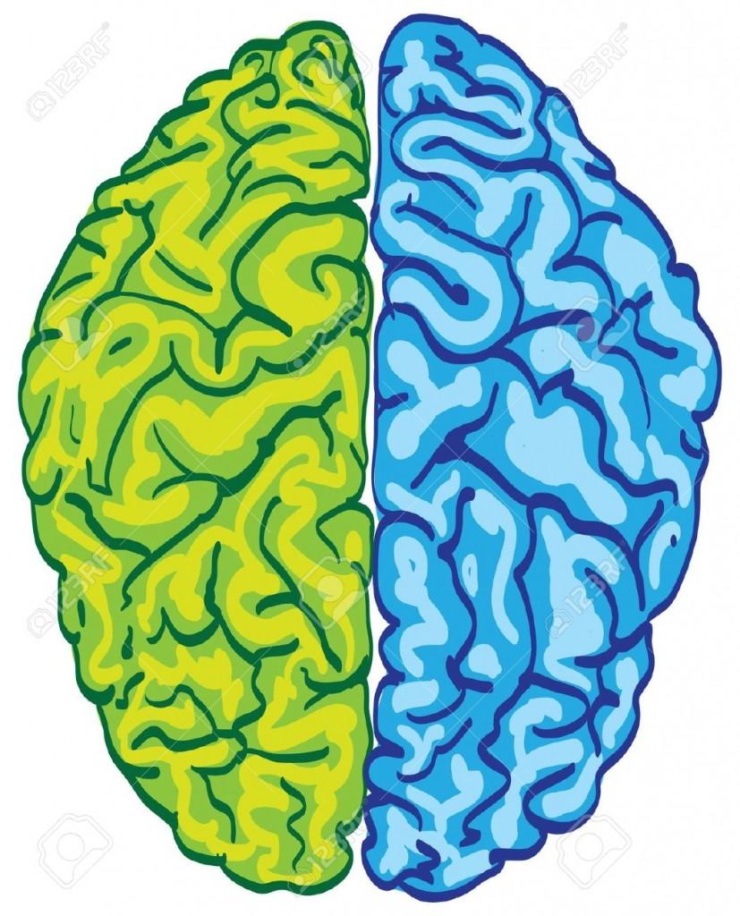 Brain clipartion com . Mind clipart colorful