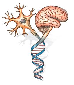 U of t neurosurgery. Mind clipart neurosurgeon