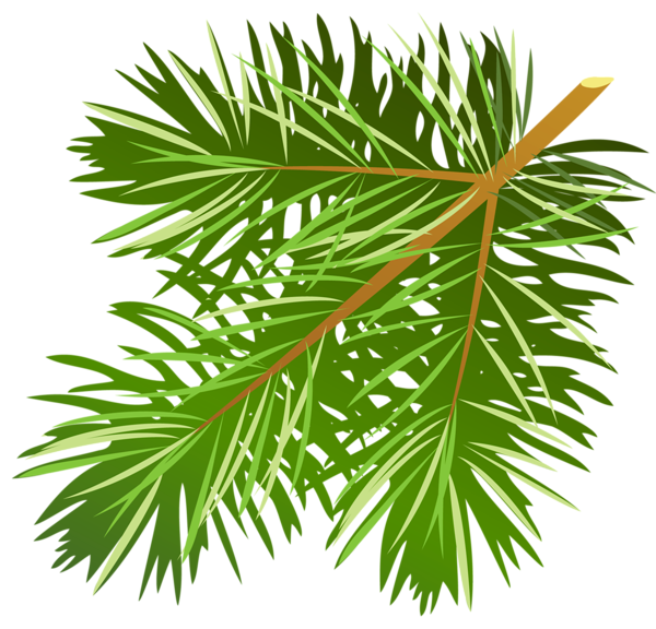 Pinecone clipart pine sprig. Gallery free pictures