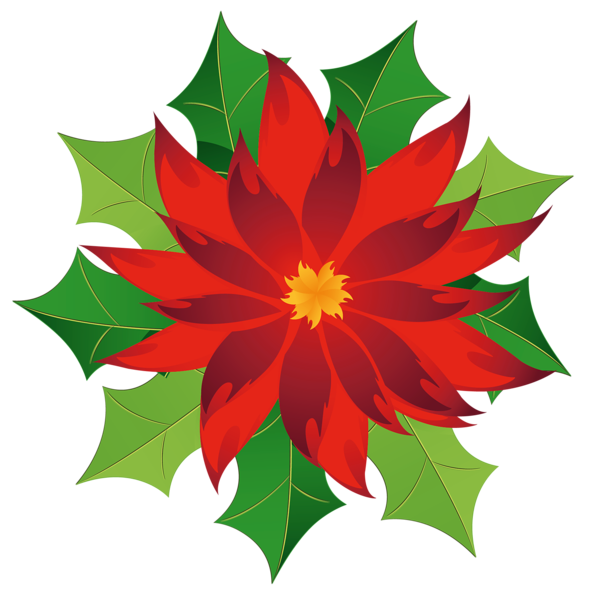 Poinsettias clipart poinsetta. Gallery christmas png