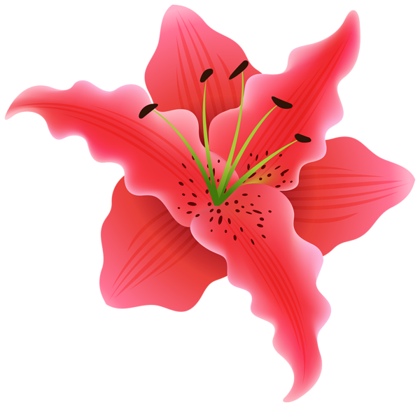 Gallery flowers png . Moana clipart exotic flower