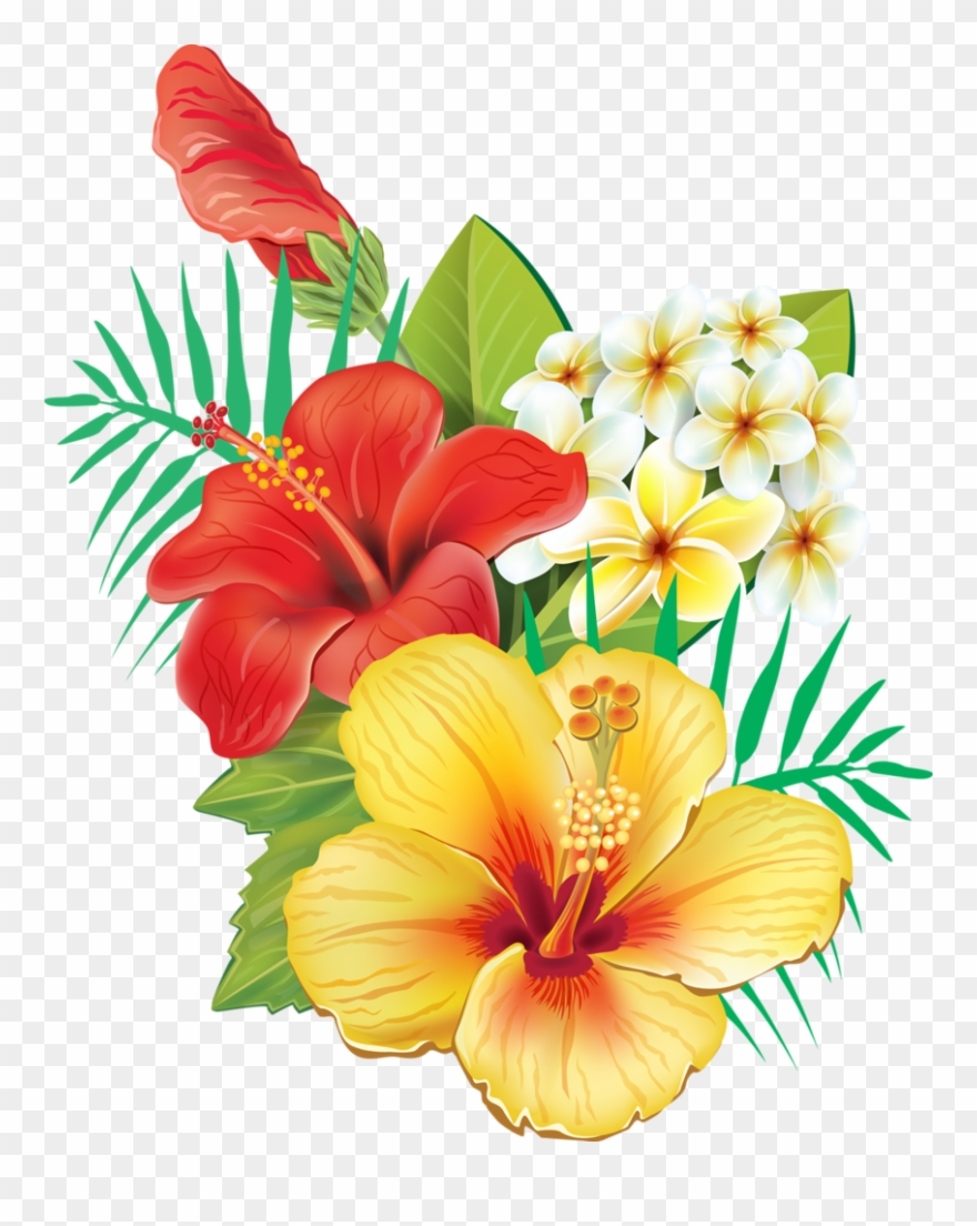 Moana clipart exotic flower. Tropical hibiscus flowers pinclipart