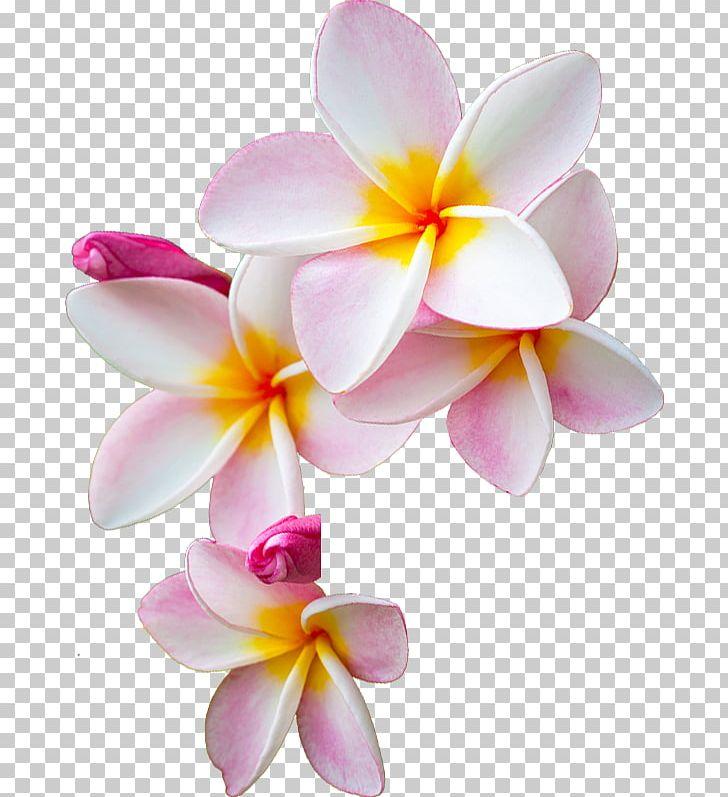 I am pin te. Moana clipart korean flower