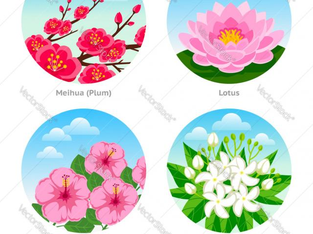 Free exotic download clip. Moana clipart korean flower