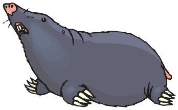 Mole clipart. Animals m png html