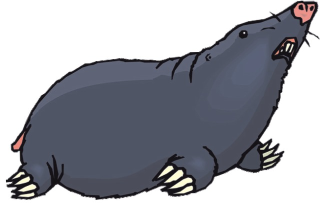 The mouse gophers png. Mole clipart